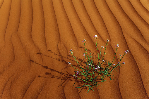 Orange Color「Flowers growing in the desert, Saudi Arabia」:スマホ壁紙(15)