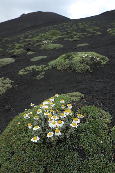 Active Volcano「Travel Destination: The Simmering Volcano Of Mount Etna」:写真・画像(15)[壁紙.com]