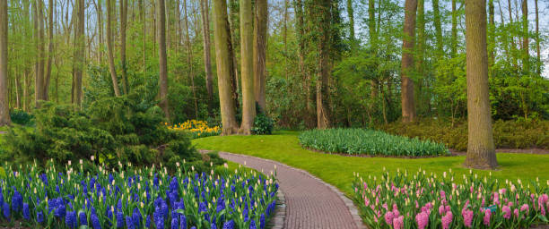 Flowers growing in woodland spring garden, Keukenhof, Lisse, Holland:スマホ壁紙(壁紙.com)