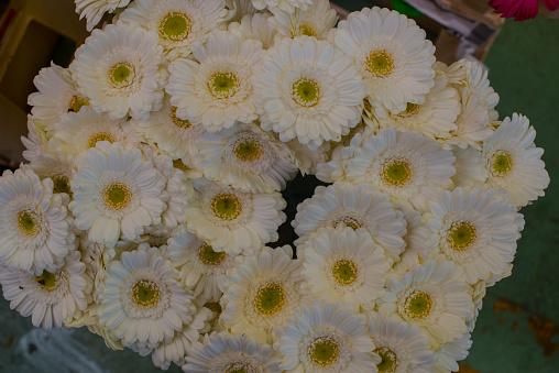 Flower Shop「white gerbera daisies」:スマホ壁紙(5)