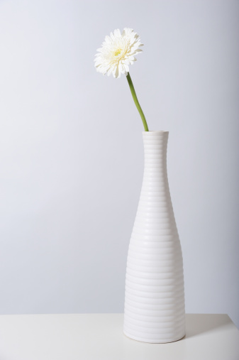 flower「White gerbera daisy in white vase」:スマホ壁紙(11)