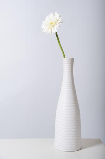 花瓶「White gerbera daisy in white vase」:スマホ壁紙(11)