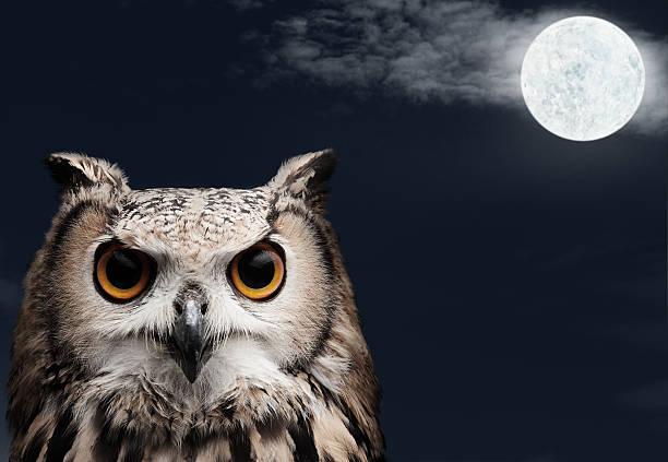 African Eagle Owl:スマホ壁紙(壁紙.com)