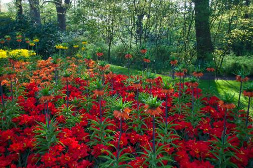 Keukenhof Gardens「Keukenhof Gardens in Springtime Bloom」:スマホ壁紙(10)