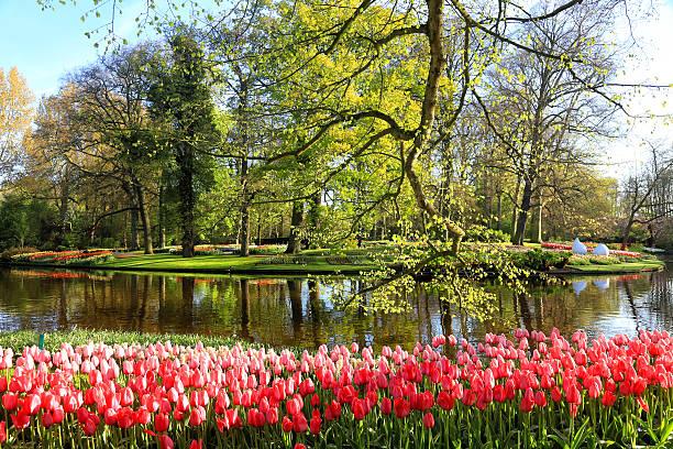 Keukenhof Gardens, Lisse, Netherlands:スマホ壁紙(壁紙.com)