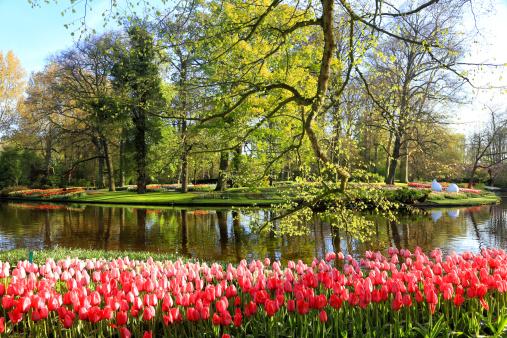 Keukenhof Gardens「Keukenhof Gardens, Lisse, Netherlands」:スマホ壁紙(4)