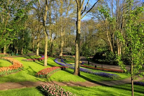 Keukenhof Gardens「Keukenhof Gardens, Lisse, Netherlands」:スマホ壁紙(2)