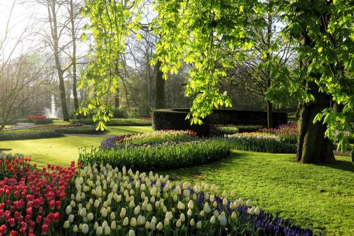 Keukenhof Gardens「Keukenhof Gardens, Lisse, Netherlands」:スマホ壁紙(8)