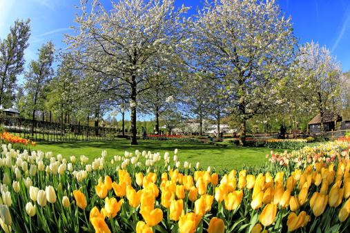 Keukenhof Gardens「Keukenhof Gardens, Lisse, Netherlands」:スマホ壁紙(0)