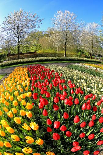Keukenhof Gardens「Keukenhof Gardens, Lisse, Netherlands」:スマホ壁紙(5)