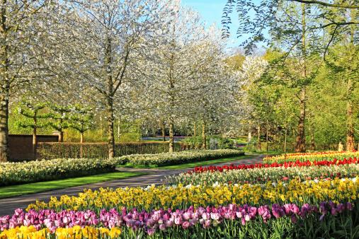 Keukenhof Gardens「Keukenhof Gardens, Lisse, Netherlands」:スマホ壁紙(14)