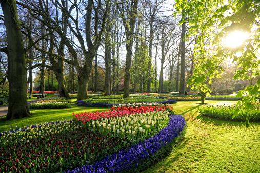 Keukenhof Gardens「Keukenhof Gardens, Lisse, Netherlands」:スマホ壁紙(11)