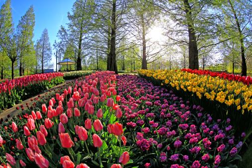 Keukenhof Gardens「Keukenhof Gardens, Lisse, Netherlands」:スマホ壁紙(12)