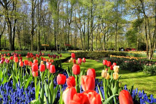 Keukenhof Gardens「Keukenhof Gardens, Lisse, Netherlands」:スマホ壁紙(10)