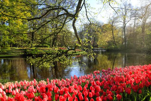 Keukenhof Gardens「Keukenhof Gardens, Lisse, Netherlands」:スマホ壁紙(9)
