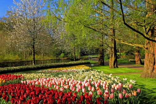 Keukenhof Gardens「Keukenhof Gardens, Lisse, Netherlands」:スマホ壁紙(6)