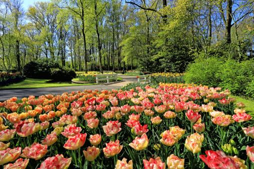 Keukenhof Gardens「Keukenhof Gardens, Lisse, Netherlands」:スマホ壁紙(1)