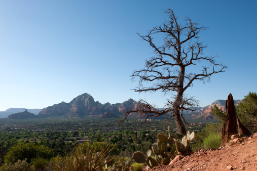 Sedona「Red Rock formations and vegetation in Sedona」:スマホ壁紙(11)