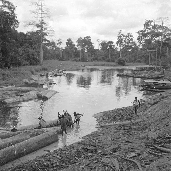 Shallow「Mahogany Logging」:写真・画像(16)[壁紙.com]