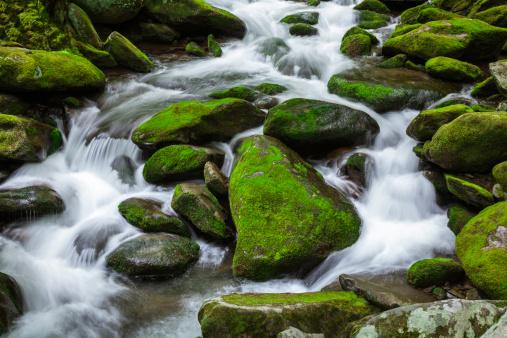 Roaring Fork River「rushing whitewater stream in forest」:スマホ壁紙(13)