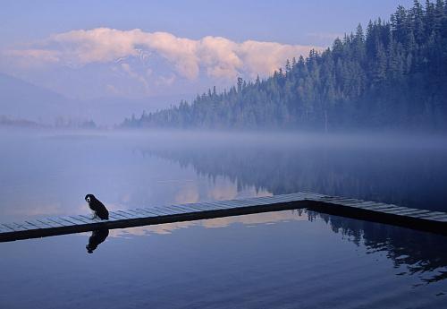 Pemberton「One Mile Lake, Near Pemberton, Bc In Early Morning Mist」:スマホ壁紙(15)