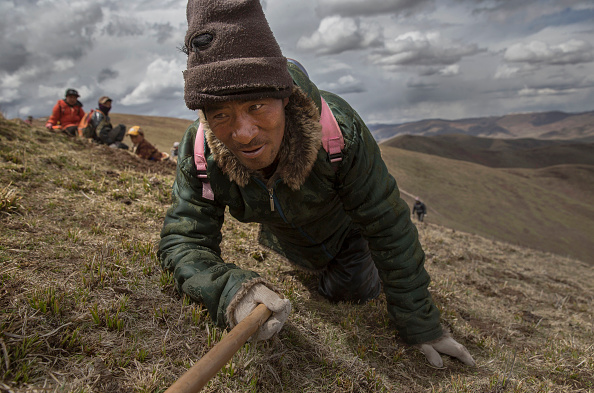 Crawling「Search For Prized Fungus A Way Of Life On Tibetan Plateau」:写真・画像(3)[壁紙.com]