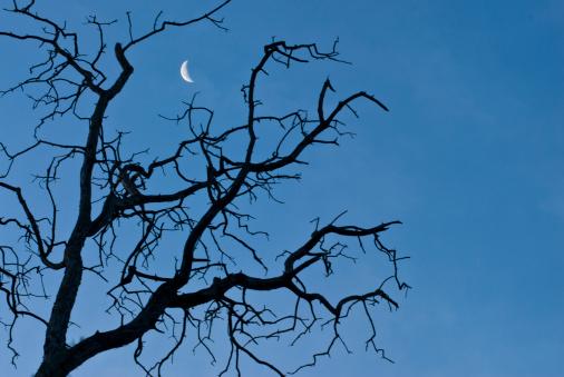 月「Moon seen through branches of leafless tree.」:スマホ壁紙(11)