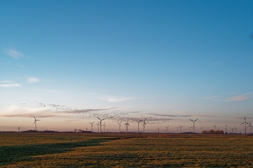 Wind Turbine「Barnacle geese flying over wind turbines, East Frisia, Lower Saxony, Germany」:スマホ壁紙(10)