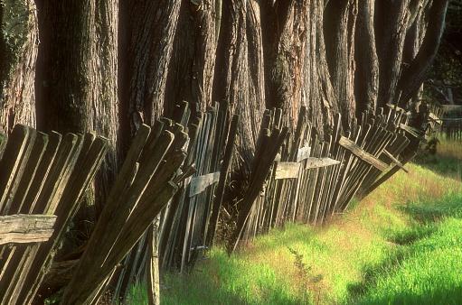 スノーボード「An Olden Wooden Fence Surrounding Tree Trunks, Northern California Coast U.S.A.」:スマホ壁紙(9)