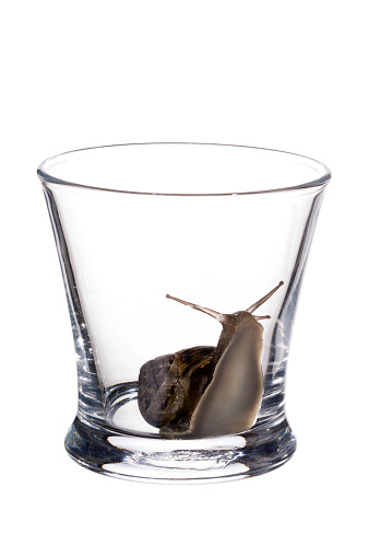 snails「Snail in glass」:スマホ壁紙(18)