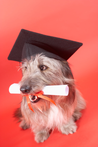 Graduation「Dog with mortarboard and diploma」:スマホ壁紙(2)