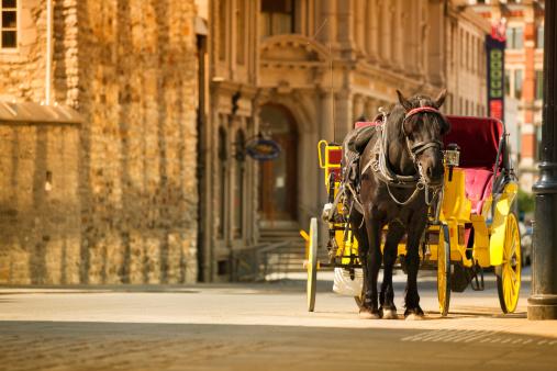Horse-drawn carriage「旧モントリオール(ケベック州、カナダ)」:スマホ壁紙(0)