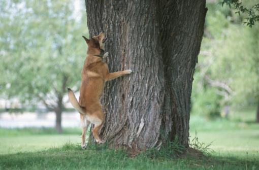 Animals Hunting「Dog barking up a tree」:スマホ壁紙(14)