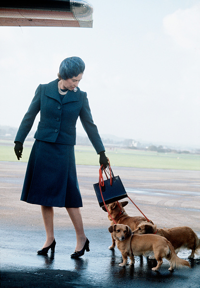 犬「Queen Elizabeth ll arrives at Aberdeen Airport...」:写真・画像(8)[壁紙.com]