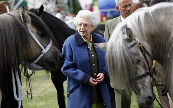 Horse「Windsor Horse Show - Day 3」:写真・画像(6)[壁紙.com]