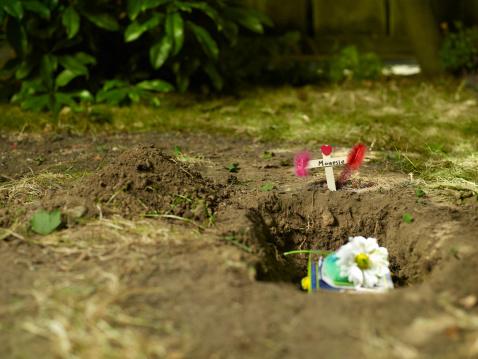 掘る「pet マウスの墓」:スマホ壁紙(10)