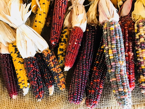 Indian Corn「Indian Corn」:スマホ壁紙(12)