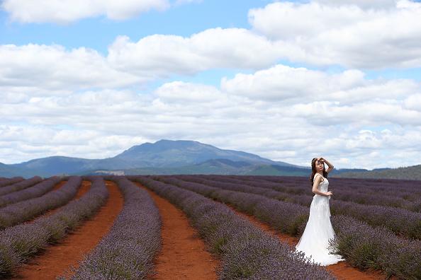トップランキング「Flowers In Full Bloom At Bridestowe Lavender Estate」:写真・画像(6)[壁紙.com]