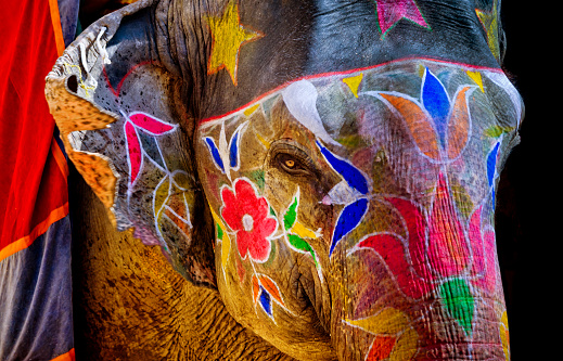 Indian Culture「colorful painted Elephant in India」:スマホ壁紙(17)