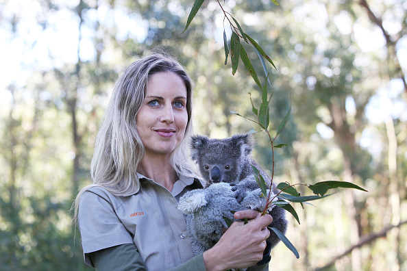 Lisa Maree Williams「Koala Joeys Born In Captivity Bring Hope For Species Numbers Following Bushfires」:写真・画像(10)[壁紙.com]