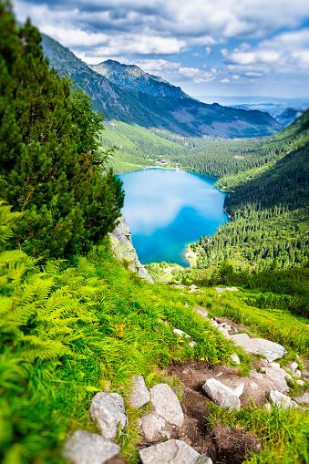 松林「、ポーランドのタトラ山脈でモルスキエ oko 湖」:スマホ壁紙(8)
