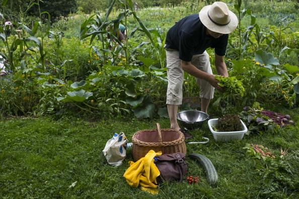 Salad「Urban Gardening Growing In Popularity」:写真・画像(8)[壁紙.com]