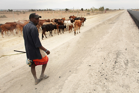Grass Family「Maasai People Struggle As Kenya Declares Drought Emergency」:写真・画像(10)[壁紙.com]