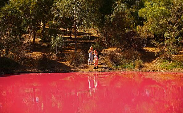 Pink Color「Melbourne's Westgate Park Lake Turns Pink」:写真・画像(5)[壁紙.com]