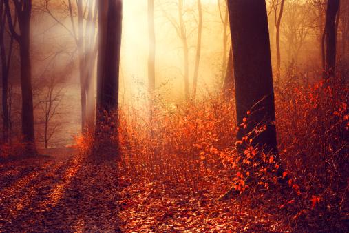 秋「Germany, Wuppertal, forest in the morning in autumn against the sun」:スマホ壁紙(15)