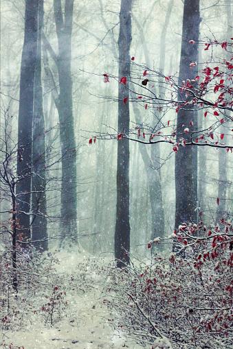 雪が降る「Germany, Wuppertal, winter forest, textured photography」:スマホ壁紙(0)