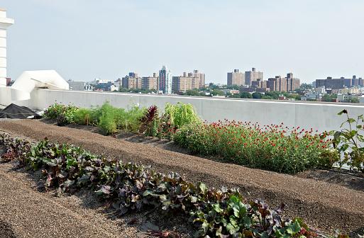 Rooftop「Urban Farming」:スマホ壁紙(9)