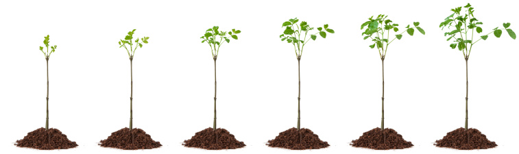 Planting「Growing Little Tree」:スマホ壁紙(19)