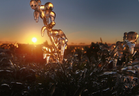 Weather「Florida's Farmers Fear Crop Damage As Early Cold Snap Hits South Florida」:写真・画像(4)[壁紙.com]