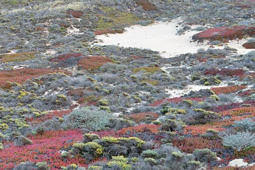Big Sur「Flora at Sand Dunes」:スマホ壁紙(7)